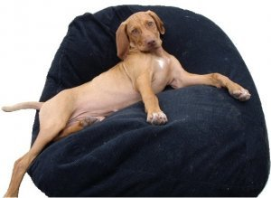 Large Pet Bean Bag   Ginger 2